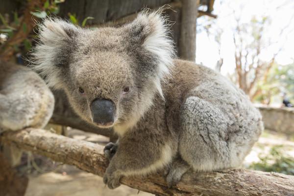 Reisetips fra Australia