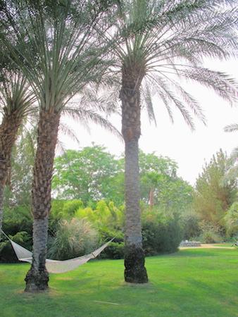 reisetips palm springsx-4