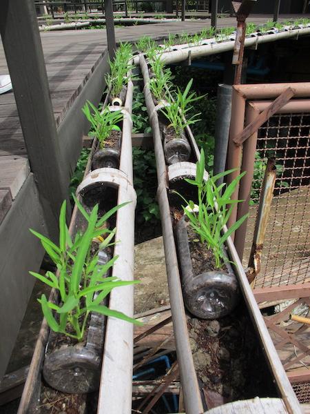 Urter og grønnsaker dyrkes frem på hotellets område.
