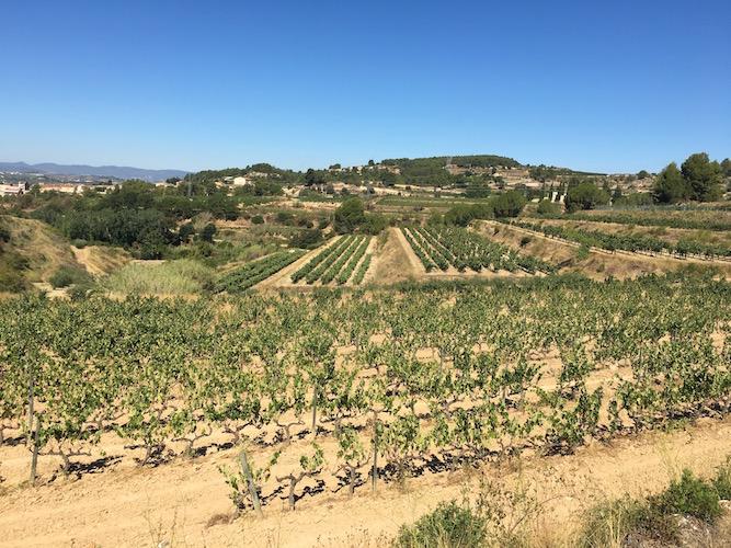 segway_økologisk_vingård_barcelona-17