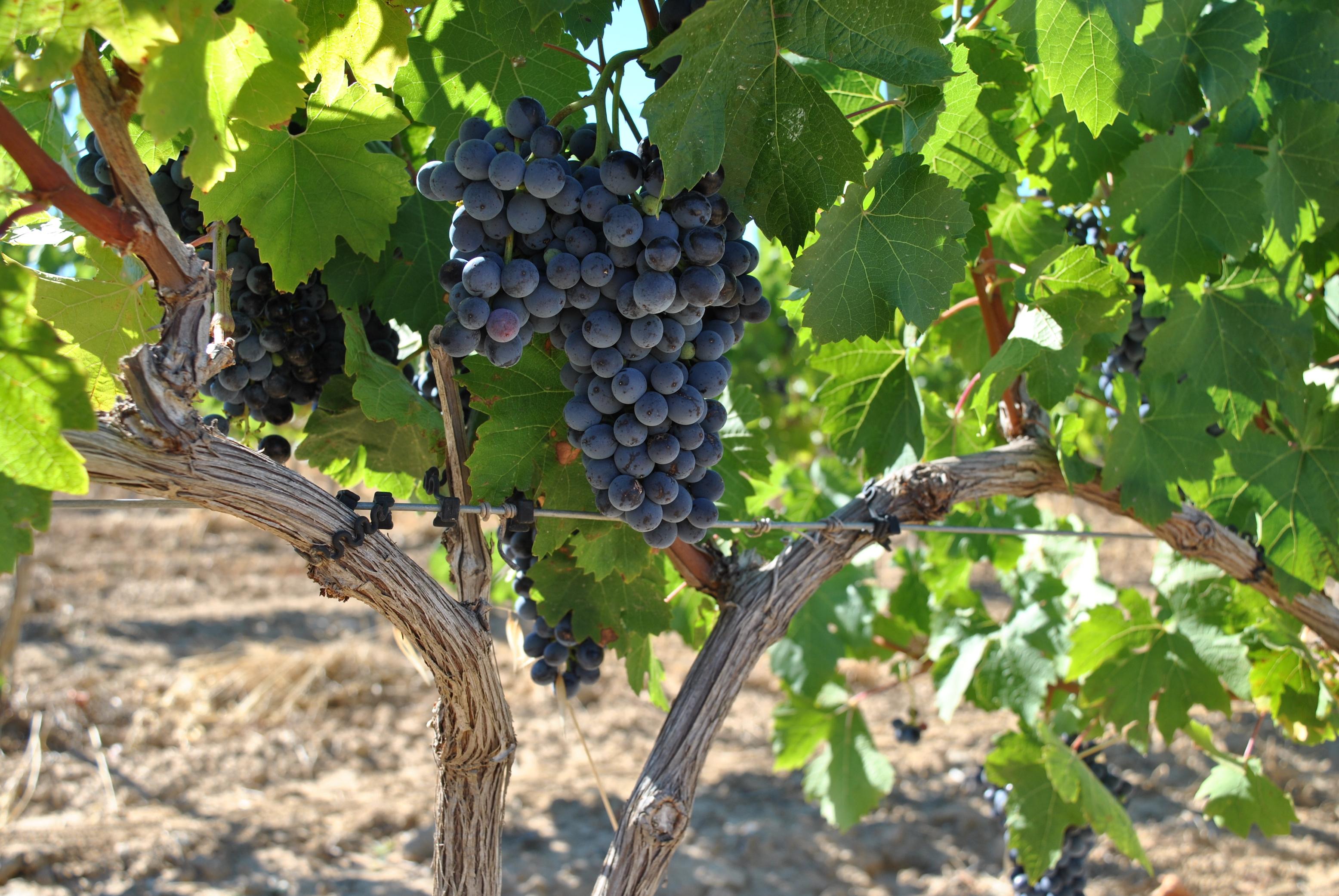 segway_økologisk_vingård_barcelona-4