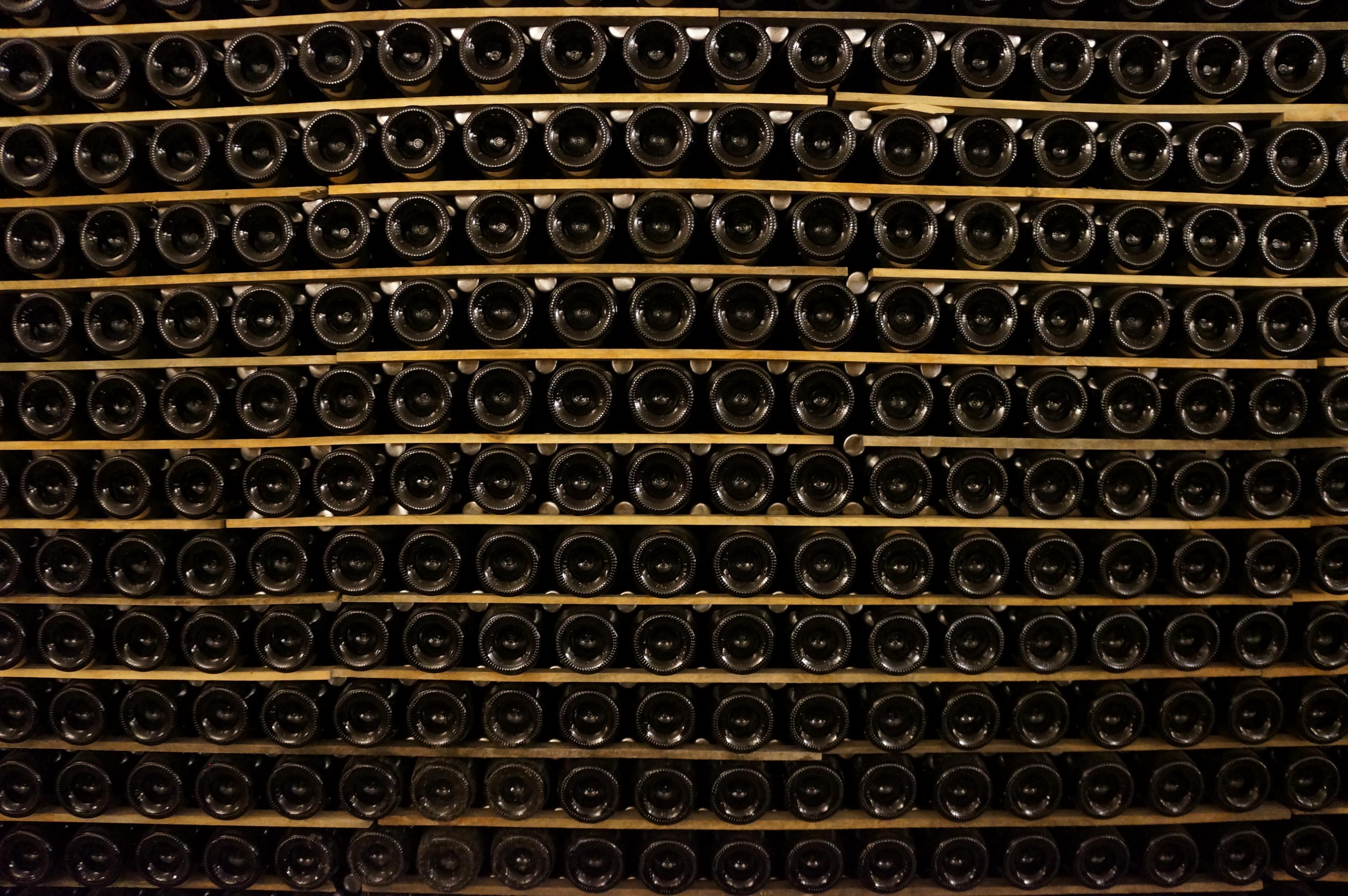 segway_økologisk_vingård_barcelona-12