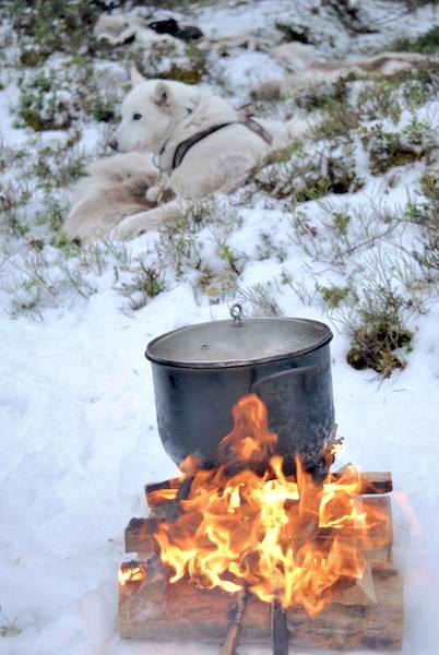 hundekjøring med hundespann på beitostølen10