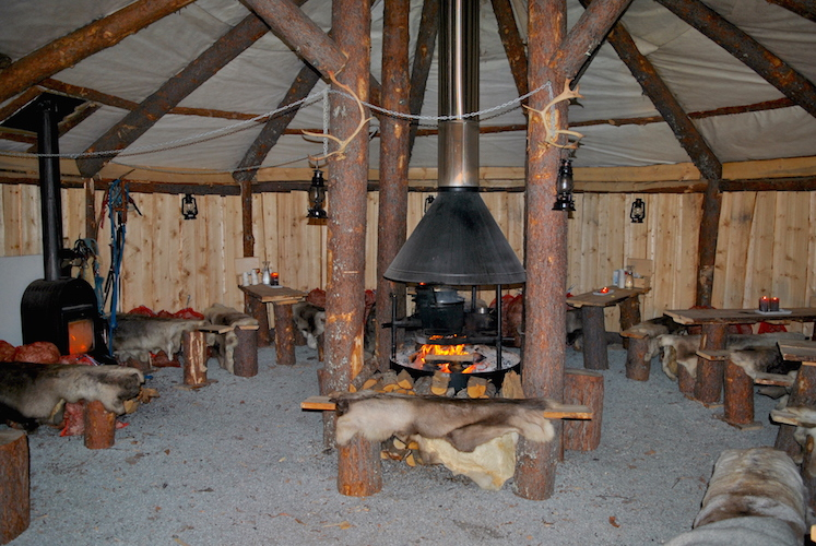 tromsø-reisetips-reinsdyr18