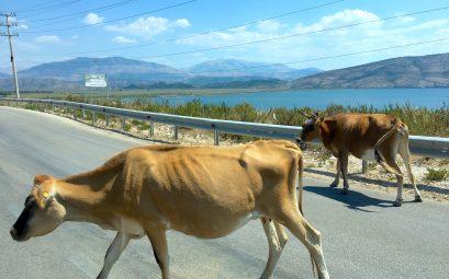 Reisetips til Albania?