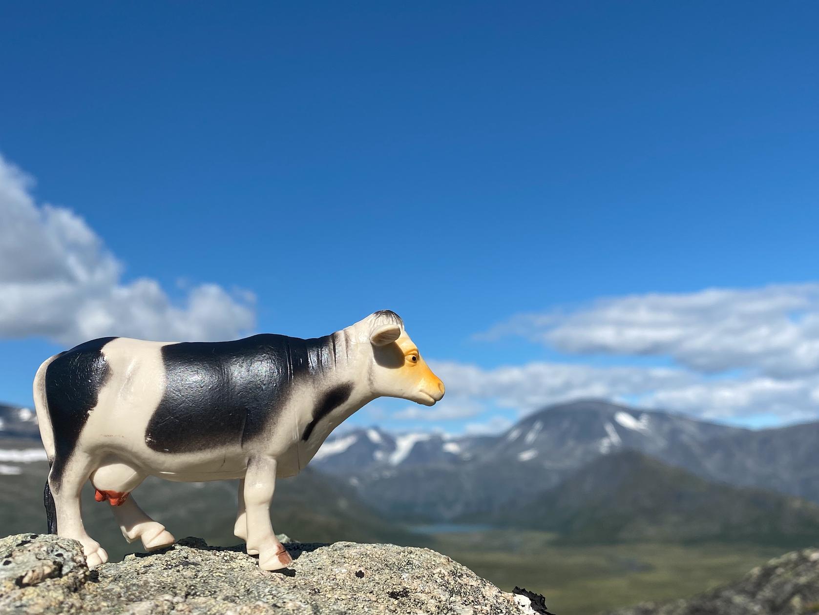 Husk å ta med noen små leketøy hvis du skal på fjelltur med baby, som denne lille kua ...